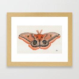 Moth One Framed Art Print