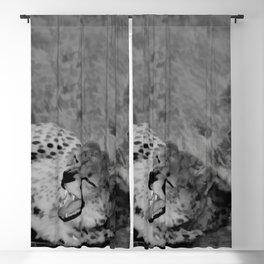 Cheetah fangs Blackout Curtain