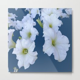 White Garden Petunia Flowers On Blue Art Metal Print