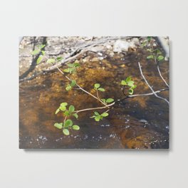 McNallie Creek Metal Print