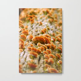 Clustered Shrooms on a Bright Log Metal Print