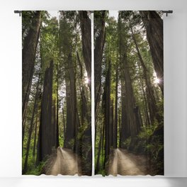 Redwoods Make Me Smile - Nature Photography Blackout Curtain