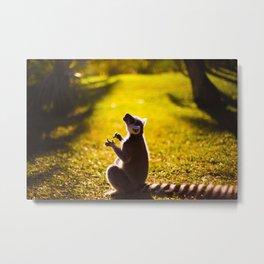 Lemur in the Sun Metal Print
