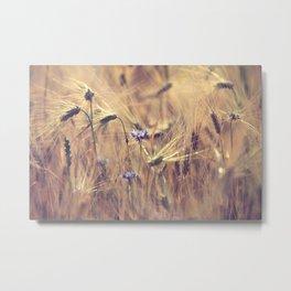 Corn flower Metal Print