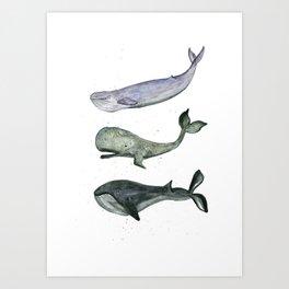 Whales. Art Print