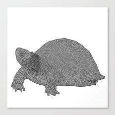 Turtle Illustration B/W Canvas Print