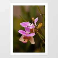 orchid Art Prints featuring Orchid by Julio O. Herrmann