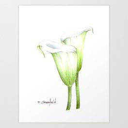 White Calla Lillies Art Print