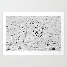 Dalmatian in Snow  Art Print