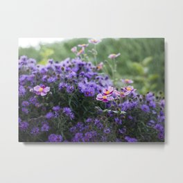 Asters and Japanese Anemones Metal Print