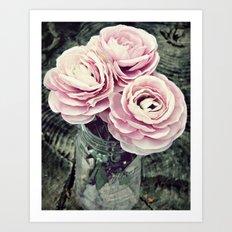 Pretty Ranunculus Art Print