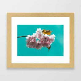 Cheery blossom green background Framed Art Print