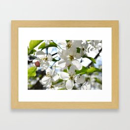 Crabapple Flowers 05 Framed Art Print
