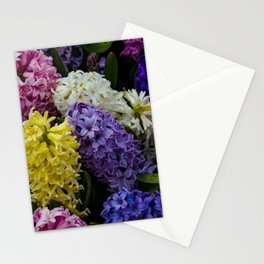 Colorful Hyacinth Blossoms Growing Together in a Garden in Amsterdam, Netherlands Stationery Cards