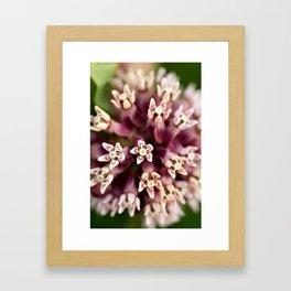 Macro Milkweed Framed Art Print