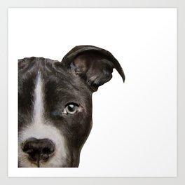 Pitbull Dark brown Dog illustration original painting print Art Print