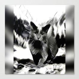 Cat Models: Smokey 01-03 Canvas Print