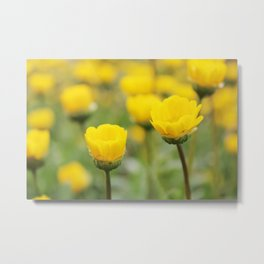 Melampodium Yellow Wild Flowers Full Bloom Photography Metal Print
