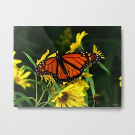 Butterflies Are Natures Beauty Metal Print