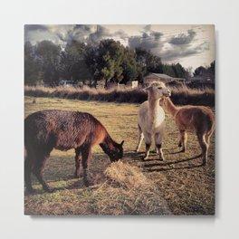 Alpaca Family Metal Print