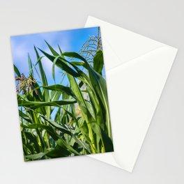 Corn Field Blue Sky Close-up Stationery Cards