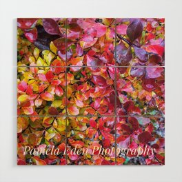 Barberry Fall Colors Wood Wall Art
