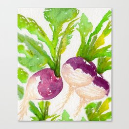 TURNIPS Canvas Print