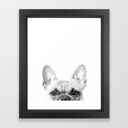 Bruno The French Bulldog Framed Art Print
