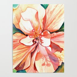 Double Peach Tropical Hibiscus Poster