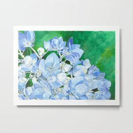 Watercolor Hydrangea Blossoms Metal Print