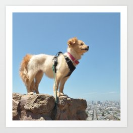 Wonder Dog in San Francisco Art Print