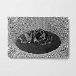 sleeping cat on sofa Metal Print