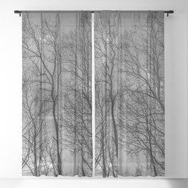 Black and white high naked trees Sheer Curtain