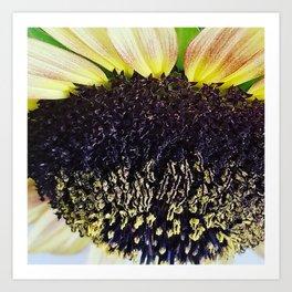 Short Sunflower Art Print