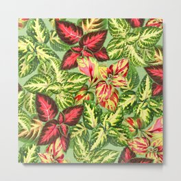 Scattered Coleus Plants on Green Linen Metal Print