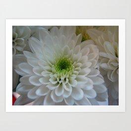 Macro Chrysanthemum Art Print