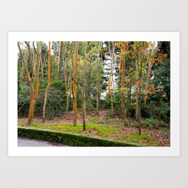 the wonderful colors of Autumn Art Print
