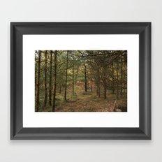 Woods of Memory Framed Art Print