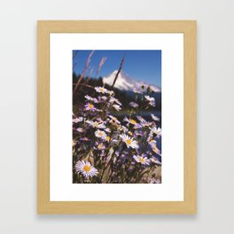 Mt. Hood's Daisies Framed Art Print