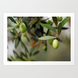 Olives On A Branch Art Print
