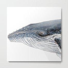 Humpback whale portrait Metal Print