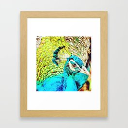 flightless bird Framed Art Print