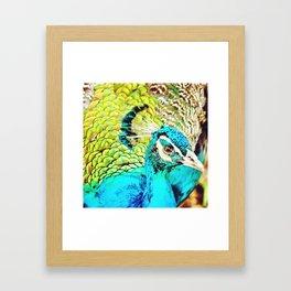 flightless bird Framed Art Print