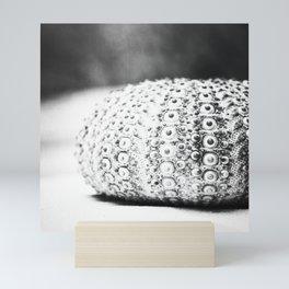 Black and White Seashell Photography, Grey Beach Photo, Sea Urchin Print, Grey Coastal Art Mini Art Print