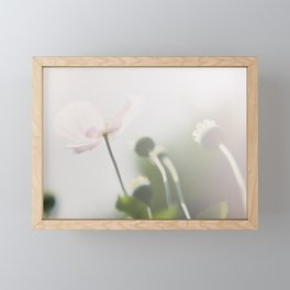 pastel pink poppy in an english country garden photograph Framed Mini Art Print