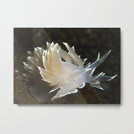 Alabaster Nudibranch Metal Print