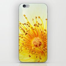 Heart of a Rose iPhone & iPod Skin