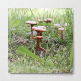 Mushroom under a leaf and acorn Metal Print
