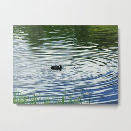 Duck in the Water at Hyde Park Metal Print