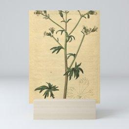 Flower 2207 saxifraga irrigua Fountain Saxifrage10 Mini Art Print